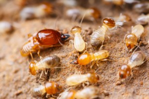 Termite Treatment Jersey City NJ