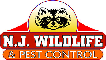 Pest Control Jersey City Pros